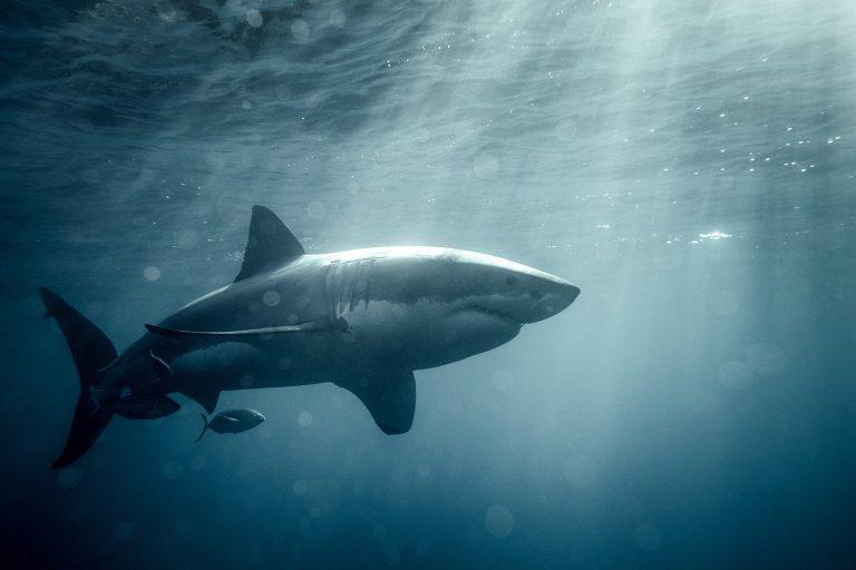 Меньше нападений акул, но больше необычных инцидентов