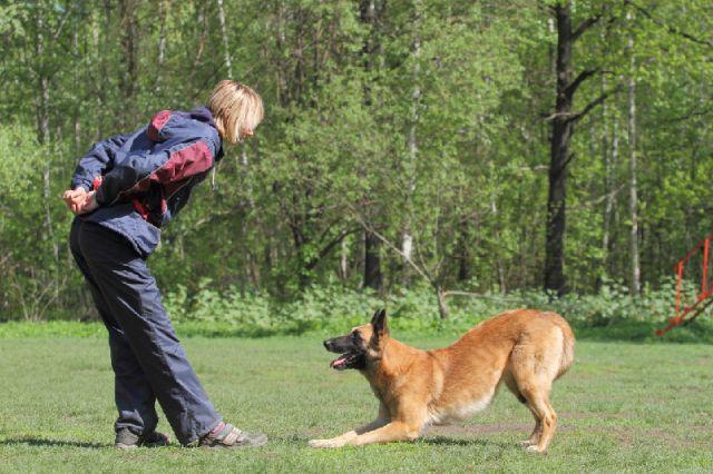 Обучение собаки: три ключа к успеху
