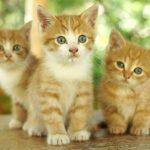 Как быстро раздать котят