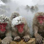 Да, обезьяны занимаются сексом с оленями. Почему они это делают?