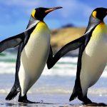Однополое сексуальное поведение у животных: у нас все неправильно?