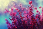 Почему стоит заказывать цветы онлайн