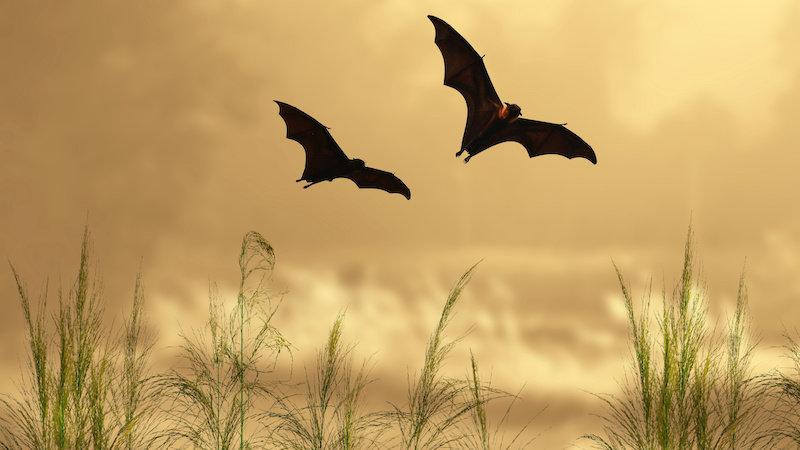 Летучие мыши знают скорость звука с рождения