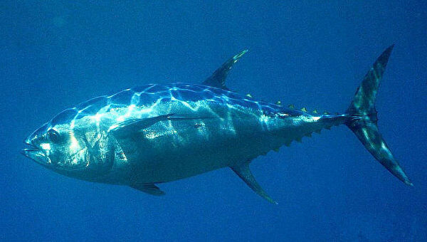 Исследователи нашли более 40 новых видов рыб в одном озере