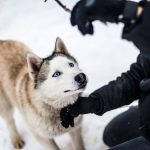 «Кооперативные» и «независимые» породы собак могут по-разному реагировать на несправедливые результаты