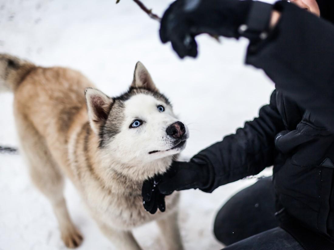 как собаки понимают людей