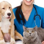Отличие онлайн и оффлайн консультации ветеринаров