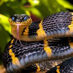 Какие змеи испытывают недостаток в ногах, которые они компенсируют со странными манипуляциями с телом