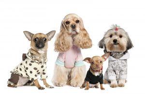 В каких целях требуется одежда для собак
