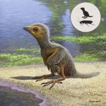 Эта маленькая птица жила 127 миллионов лет назад и умерла размером с ваш мизинец