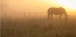 Ученые пытаются выяснить, откуда пришли лошади