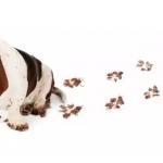 Не все собаки едят какашки, но те, которые едят любят свежие