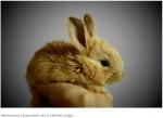 История происхождения одомашненных кроликов может быть неправильной