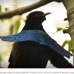 Эти птичьи перья настолько черные, что ваши глаза не могут сосредоточиться на них