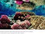 Кораллы растут в узорах, даже если мы не можем их всегда видеть