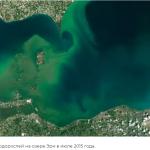 Возможно, вы вдыхаете кусочки токсичных водорослей