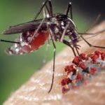 Изучение белка комаров может привести к лечению опасных для жизни вирусов