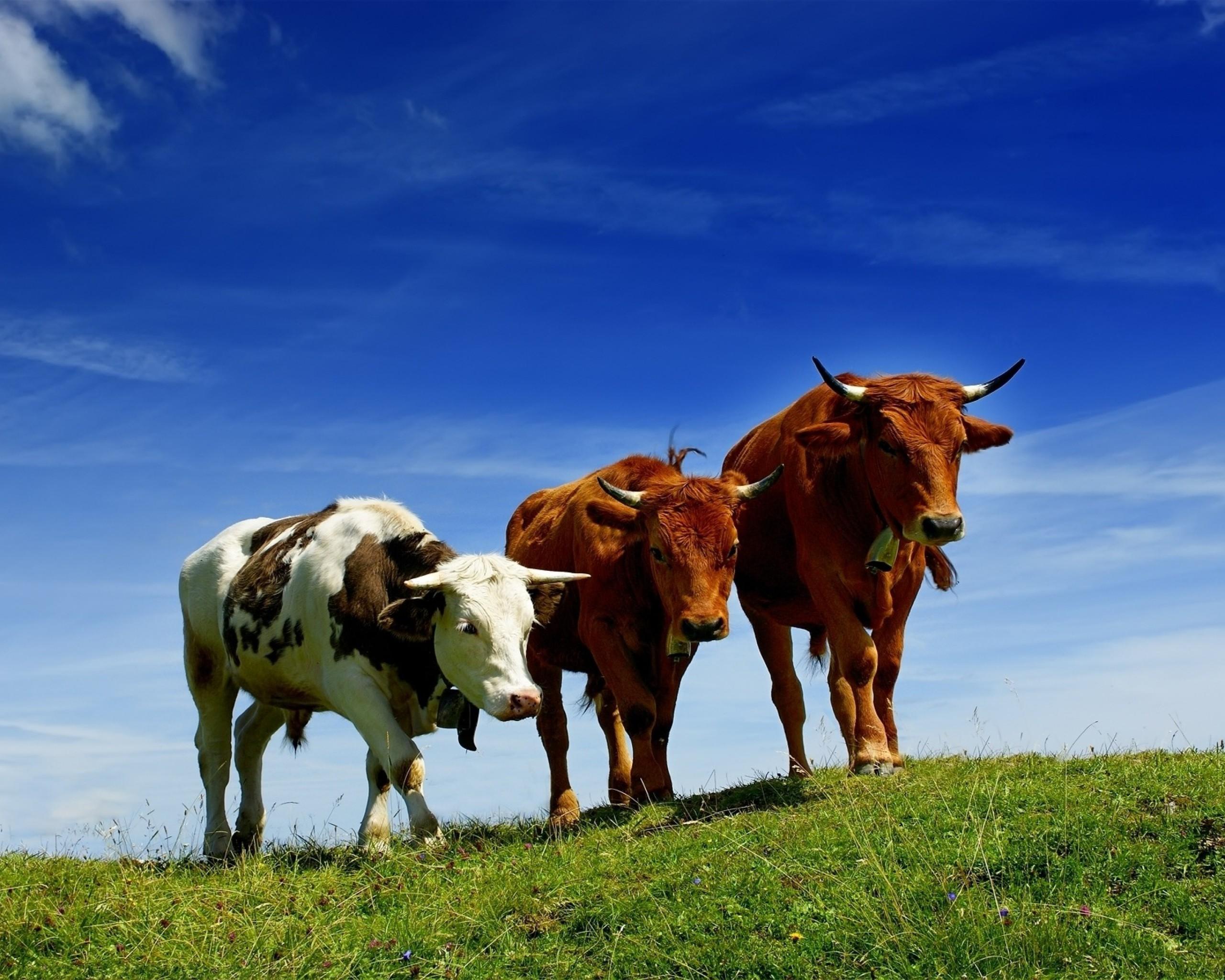 bulls-pasture-2048x2560