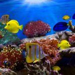 Высокий уровень CO2 замедляет переход тропических рыб в более прохладные воды