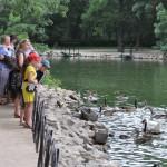 Экскурсии в заповедник Аскания-Нова