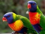 Аксессуары для попугаев
