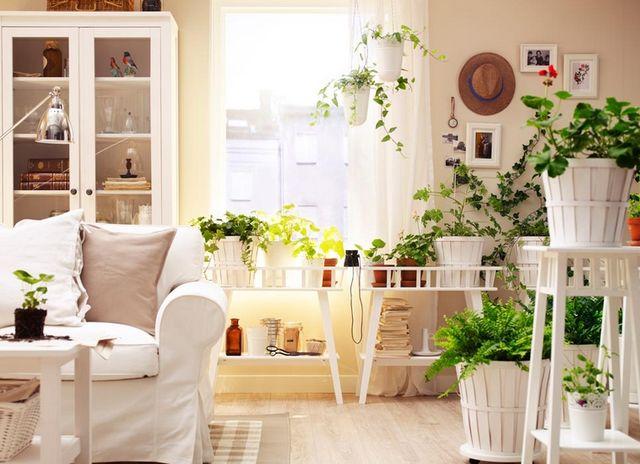 Домашние растения по фэн-шую