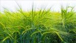 Причины слабого урожая