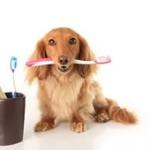 Собака и гигиена: как правильно следить за чистотой?