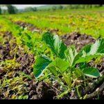 Экология земледелия – борьба с вредителями