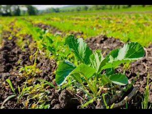 Экология земледелия - борьба с вредителями