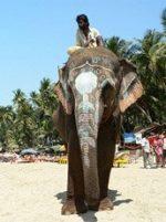 Солнечные туры на Гоа только для вас