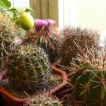 Растения в нашей жизни по фэн-шуй