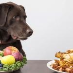 Какая пища людей безопасна для собак?