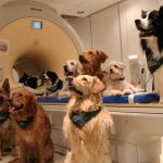 Исследование мозга показывают – как собаки обрабатывают слова?