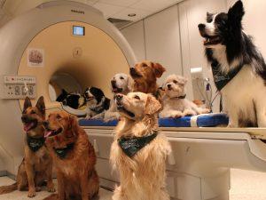 Исследование мозга показывают - как собаки обрабатывают слова?