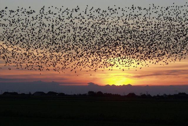Ночная миграция птиц