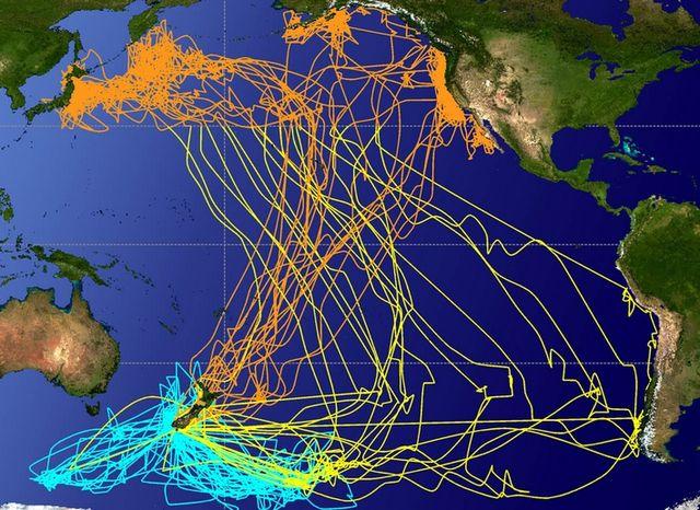 Миграция птиц через океан
