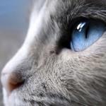 О чем говорит взгляд кошки
