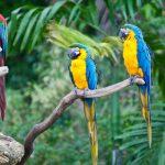 Самые умные птицы нашей планеты