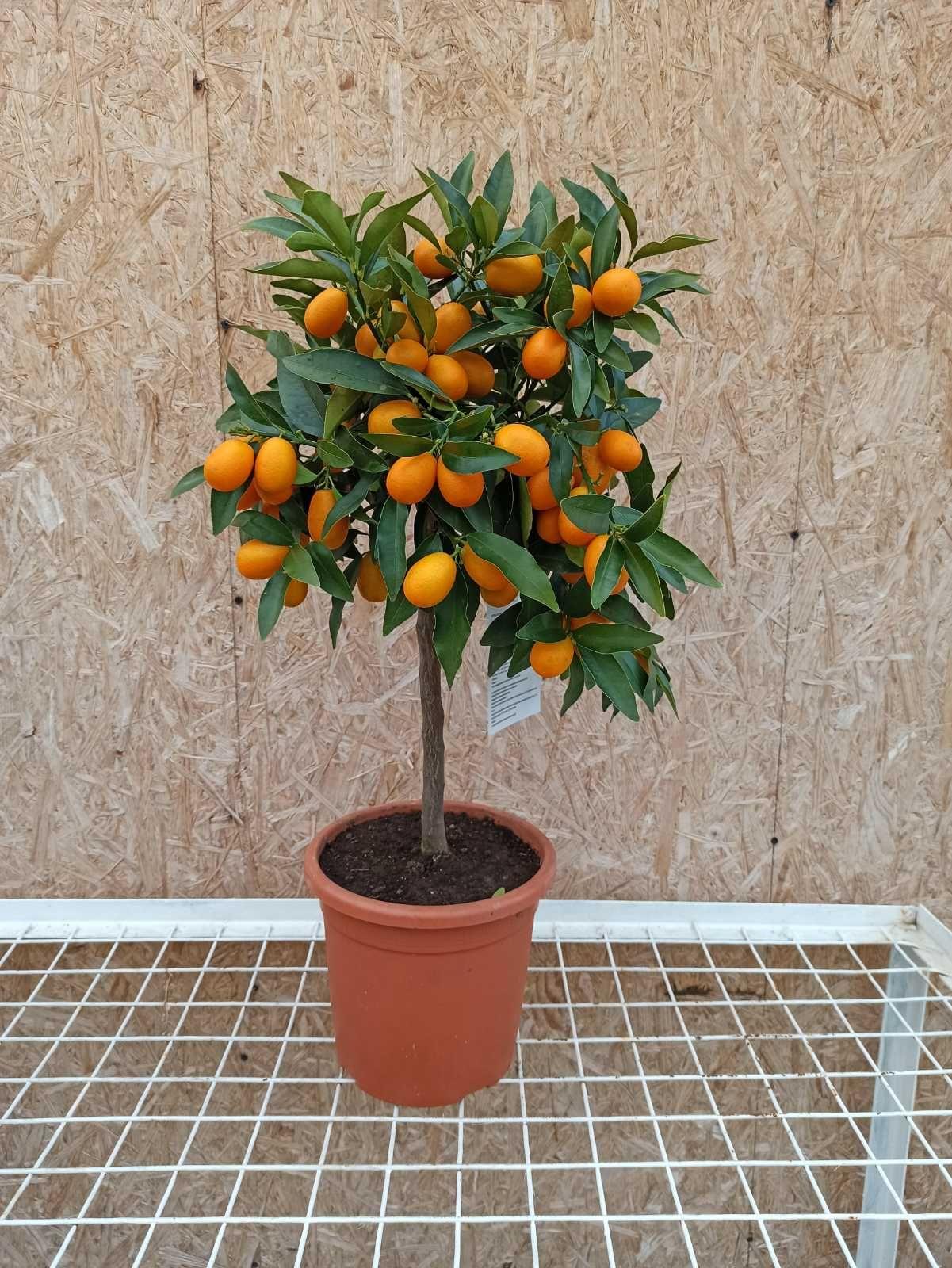 """С магазином """"Клуб тропических растений"""", можно разбить экзотический сад прямо дома"""