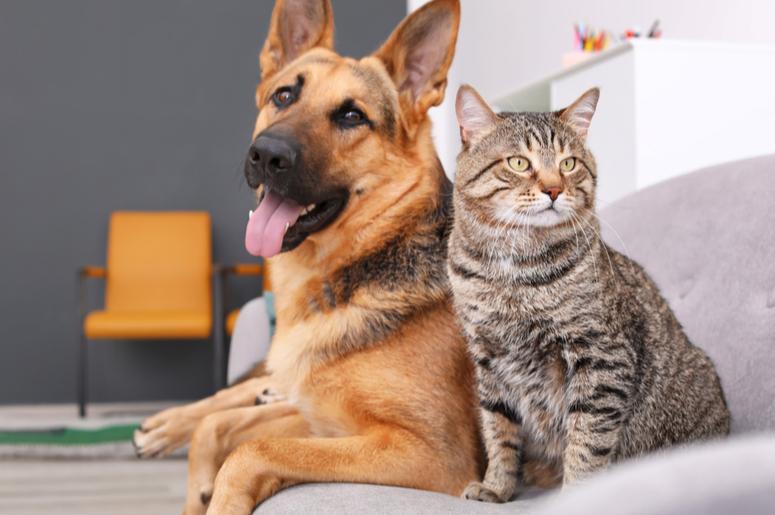 COVID-19 и домашние животные: что тут нужно знать?