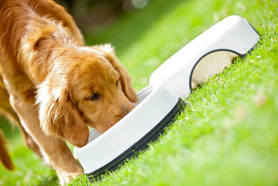 Рейтинг лучших собачьих кормов