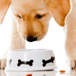 Где купить недорогой качественный корм для собак